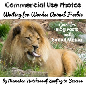 Free Commercial Use Photos