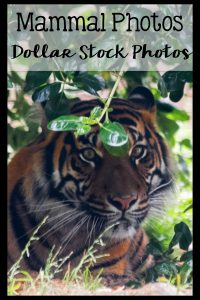 Photos by a teacher for teachers | Stock Photos for Blogging | Stock Photos for Teachers Pay Teachers